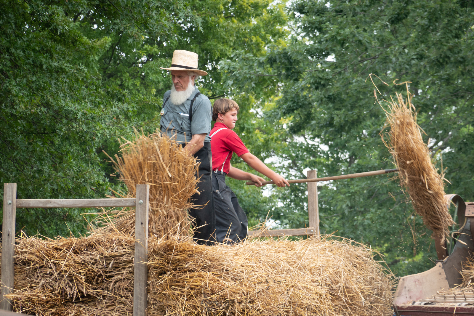 Threshing by Amish