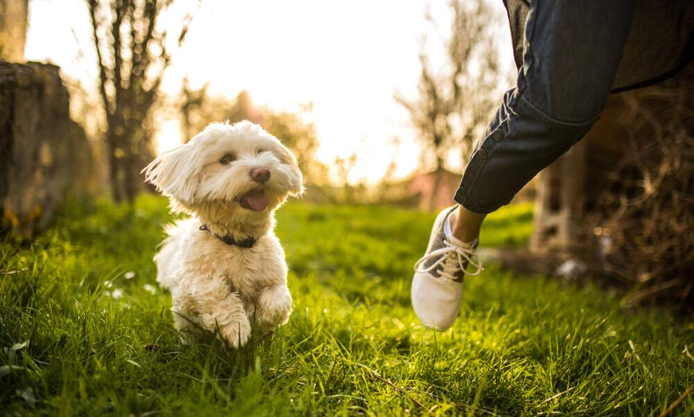 Number of dog owners in Germany soared in 2020