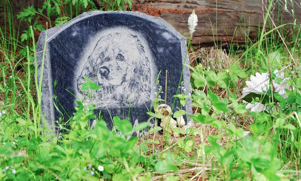 You can now be buried with your pet in Hamburg and spend eternity together