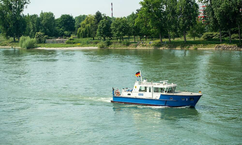 Swimming banned in river in Saxony-Anhalt after crocodile sightings