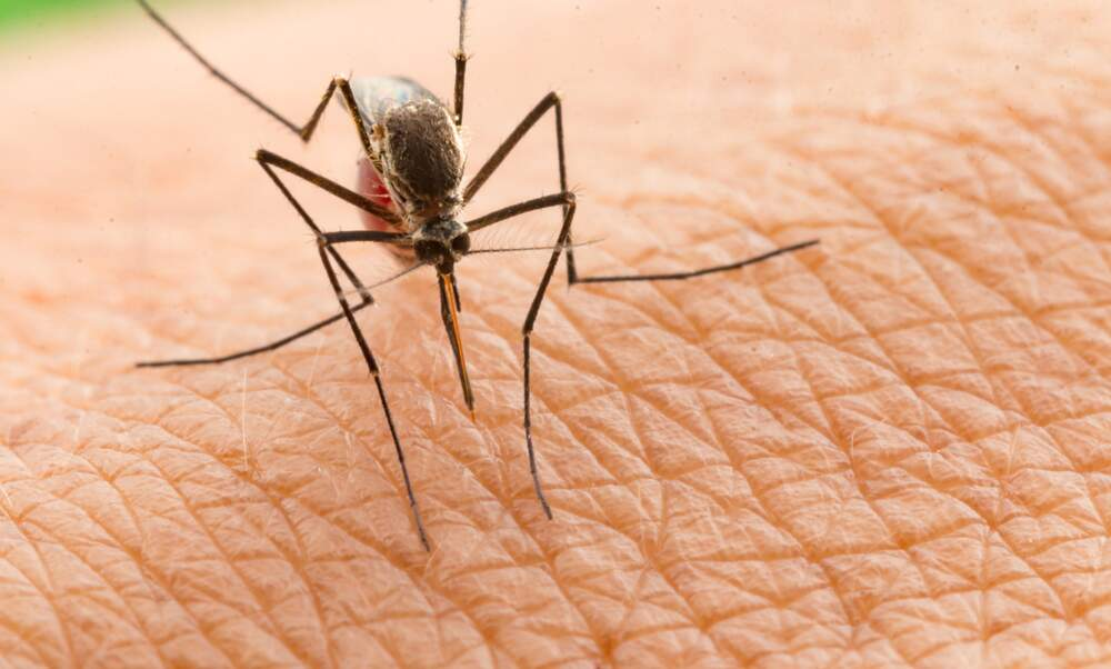 First-ever case of the West Nile Virus reported in Germany