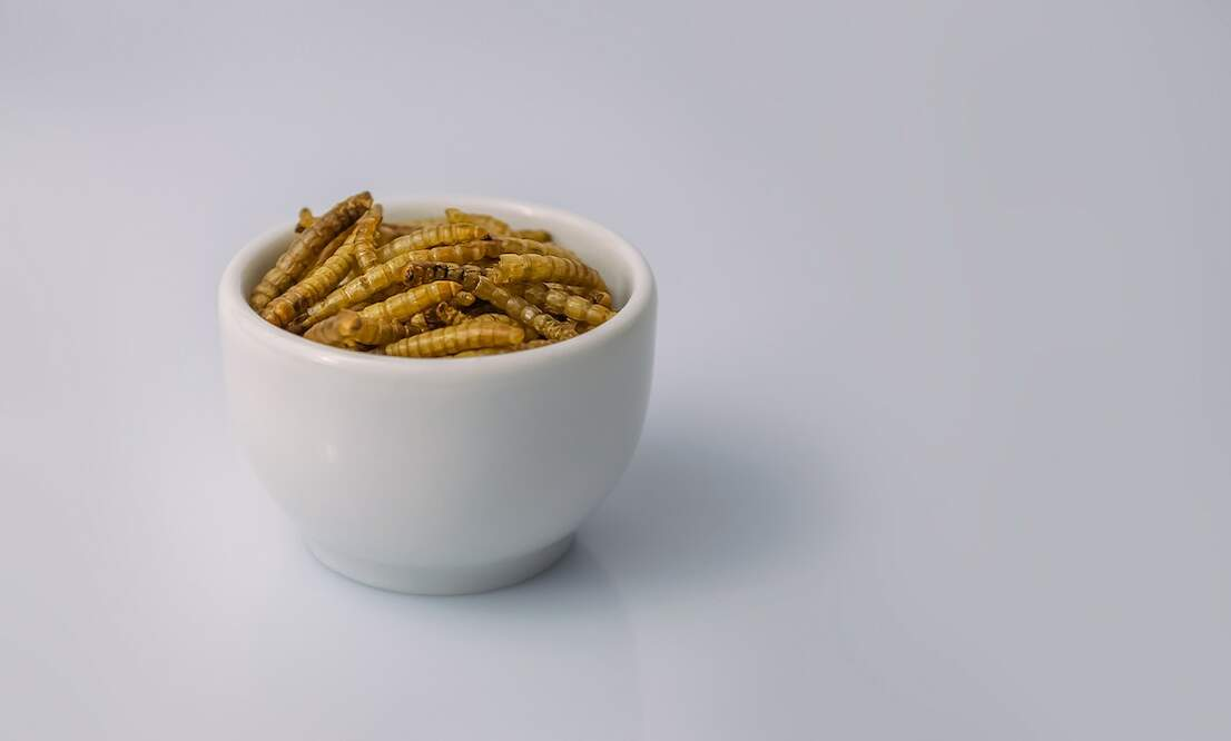 Mealworms have been approved for consumption in the EU