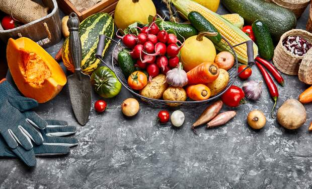 Veggienale & FairGoods: Sustainable Vegan Trade Fair