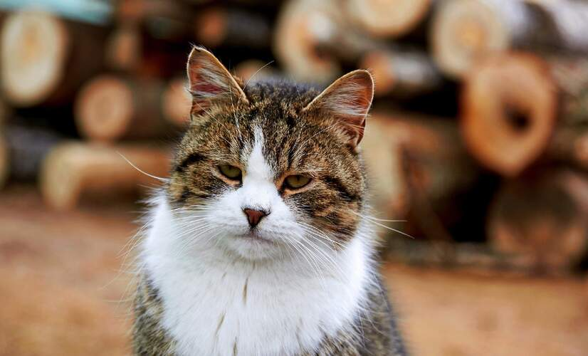 Words expats should know: Stubentiger (it's more than a cat in German)