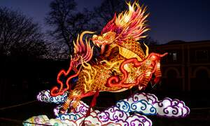 China Light Festival - Cologne Zoo