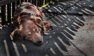 German government plans stricter controls for dog owners and breeders