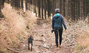 German authorities take in record 331 million euros in dog tax