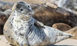 Germany's seal population up 17 percent after coronavirus empties beaches