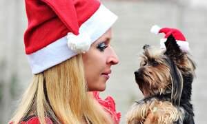 Dog Christmas Market Hamburg