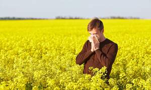 Munich university reveals problem for German hay fever sufferers