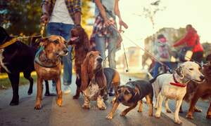 """Heel Khaleesi!"": The most popular dog names in Germany 2019"