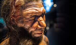 Neanderthal gene boosts risk of severe COVID-19 infection, German study finds