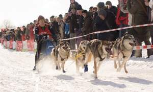 Oberharz Dog Sled Adventure