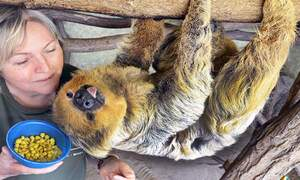 Record-breaking German sloth Paula is the oldest in the world