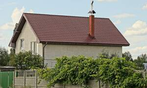Germany's high court rules that its legal to trim your neighbour's tree