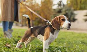 """Dog """"driving licence"""" to become mandatory for owners in Baden-Württemberg"""