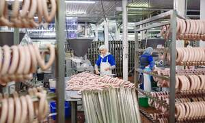Police raid abattoirs across Germany accused of smuggling in workers