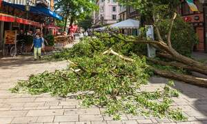 Storm Sabine caused damages of 675 million euros in Germany