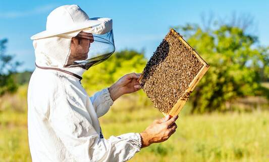 Beesharing start-up brings bees and German farmers together