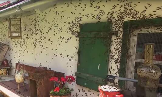 German town plagued by millions of caterpillars