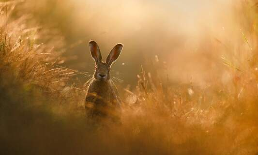 In pictures: The GDT Nature Photographer of the Year 2020