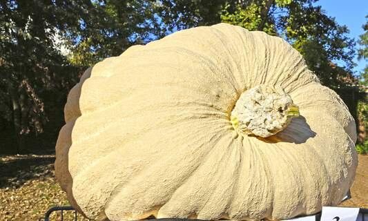 720-kilo giant crowned Germany's heaviest pumpkin of the year
