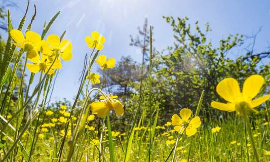 Urban wildflower meadows prove popular in Germany's cities
